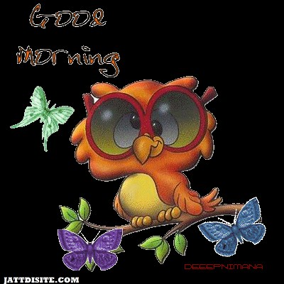 Good Morning By Owl