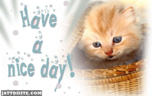 Have A Nice Day Kitty