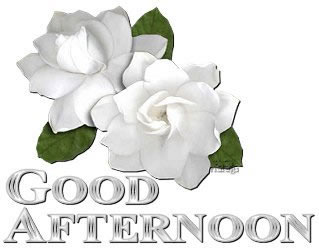 White Rose Flowers To Say Good Afternoon