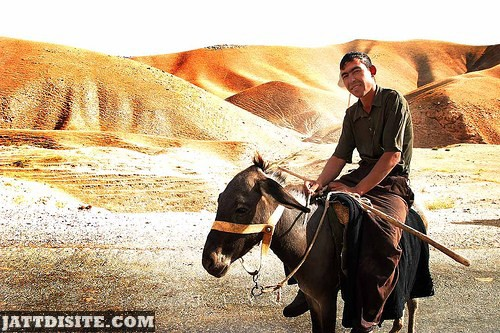 Asian Man Riding The Donkey