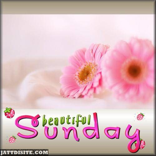 Beautiful Sunday With Pink Flower