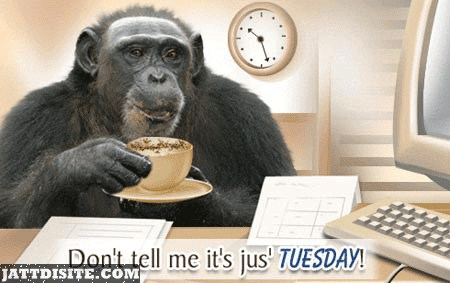 Dont Tell Me It Just Tuesday