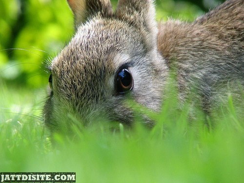Extreme Close Up Of Rabbit Face
