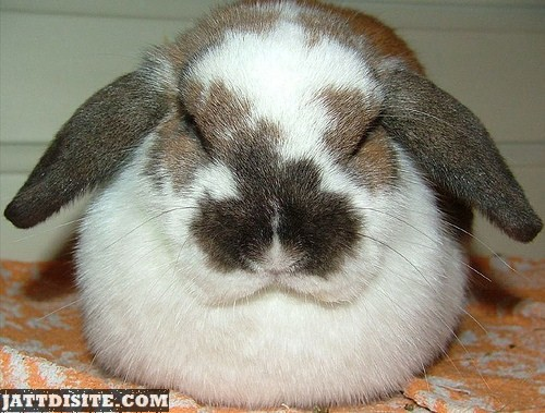 Fluffy White And Brown Rabbit