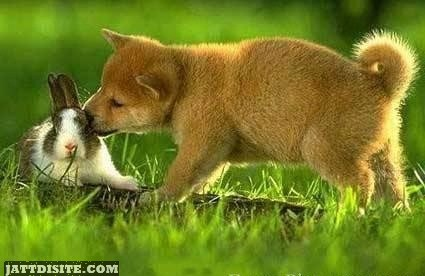 Funny Animal Kissing Picture for Fb Share