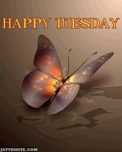 Happy Tuesday Butterflies