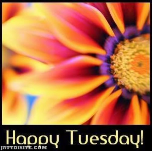Happy Tuesday Flower