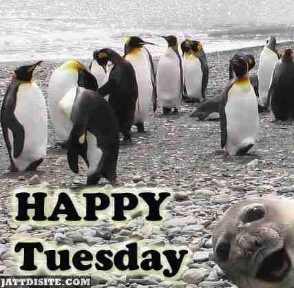 Happy Tuesday Penguins
