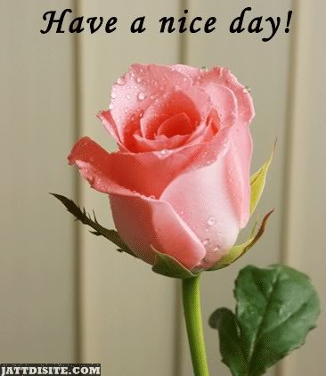 Have A Nice Day With Rose
