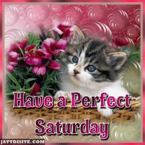 Have A Perfect Saturday
