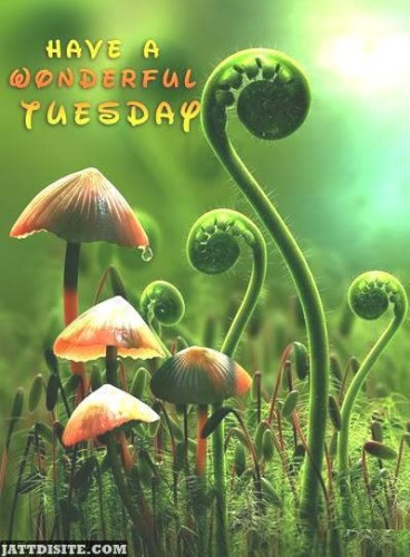 Have A Wonderful Magical Tuesday