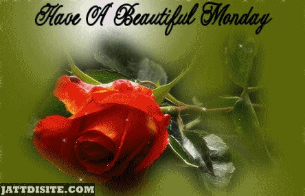 Have a Beautiful Monday Rose
