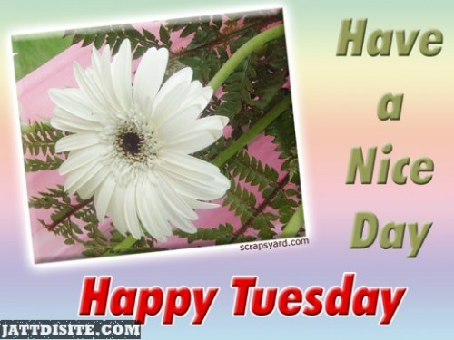 Have a Nice Tuesday