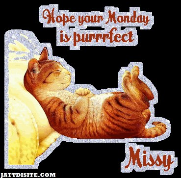 Hope Your Monday Is Perfect