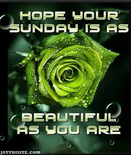 Hope Your Sunday Is