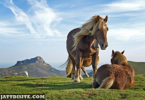 Horse And The Mare