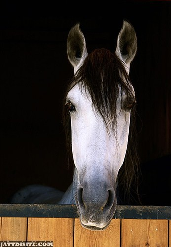 Horse Looking Outside From The Wooden Fence