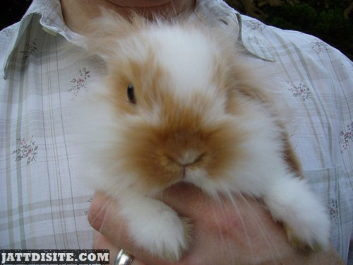 Man Holding Rabbit In His Hand