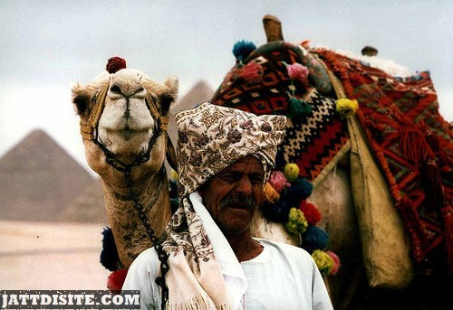 Man With Turban With His Camel
