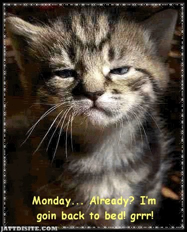 Monday I am Going Back To Bed