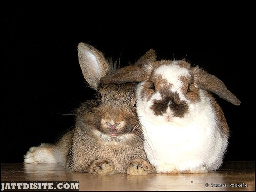 Perfect Shot Of Two Rabbits Sitting With Each Other