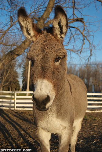 Pet Donkey In The Farm House