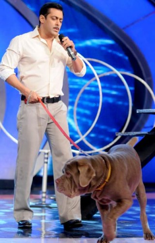 Salman Khan With His Dog In IGT