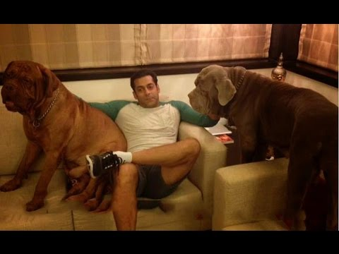 Salman Khan With His Dogs In Home