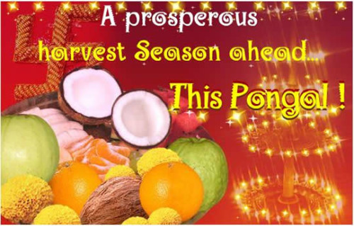 A Prosperous Harvest Season Ahead This Pongal