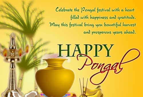 Celebrate The Pongal Festival With A Heart Filled With Happiness And Gratitude Happy Pongal