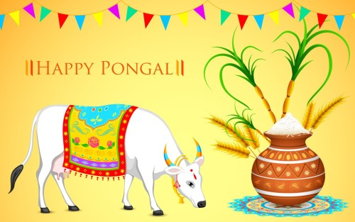 Happy Pongal Bull And Pot