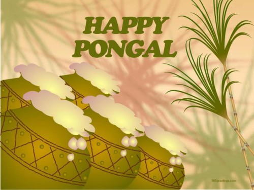 Happy Pongal Greeting Card For You Graphic For Share On Myspace