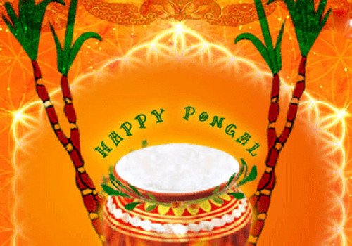 Happy Pongal Greetings For You Graphic