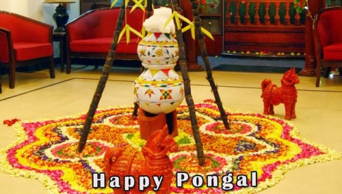 Happy Pongal Pots With Colorful Rangoli Graphic