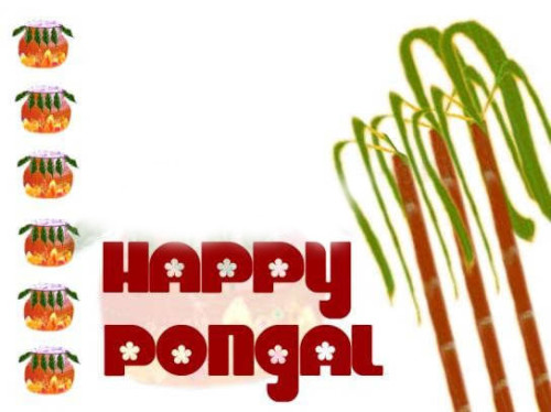 Happy Pongal Wishes For You And Your Family