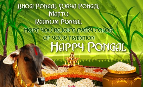 Hope You Rejoice Every Color Of Your Tradition Happy Pongal