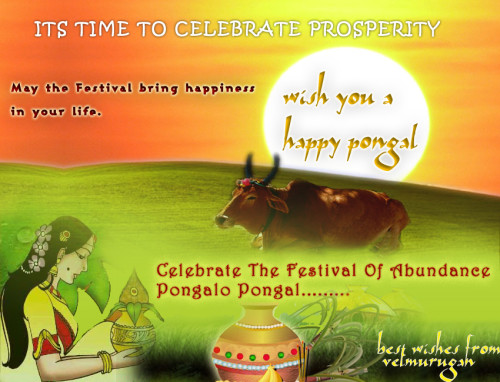 Its Time To Celebrate Prosperity Wish You A Happy Pongal