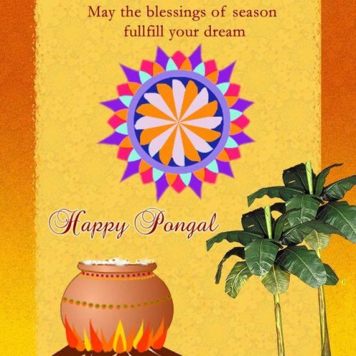 May The Blessings Of Season Fulfill Your Dream Happy Pongal