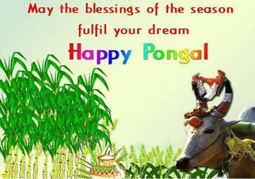 May The Blessings Of The Season Fulfil Your Dream Happy Pongal