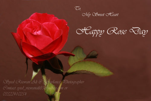 To My Sweetheart Happy Rose Day